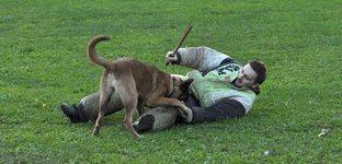 Ravenland - Que sont devenus nos chiens ?